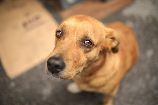 stray dog - dilapidated stock pictures, royalty-free photos & images