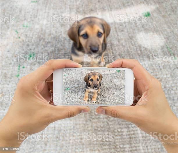 Stray dog picture id475132358?b=1&k=6&m=475132358&s=612x612&h=lrzifaeqglwhjpnkoe0o mit2bbjcv0zbnf htbomrg=