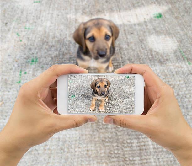 Stray dog picture id475132358?b=1&k=6&m=475132358&s=612x612&w=0&h=5b9syix107zrccus0qiclijthpaajoj20hjkrhxobvs=