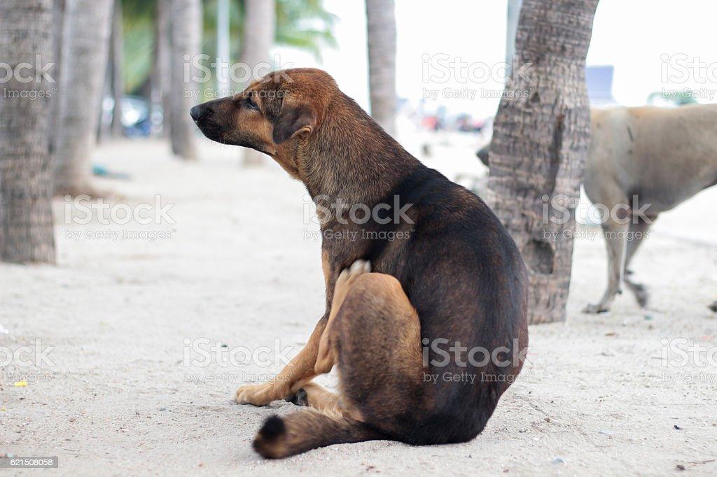 Stray Hund  Lizenzfreies stock-foto