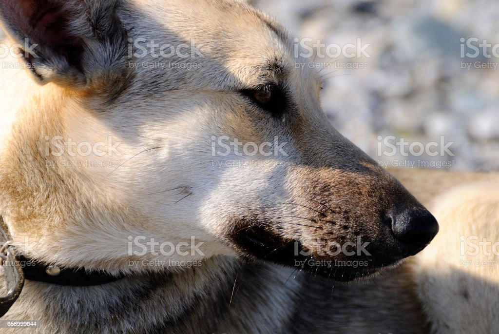 Stray dog. royalty-free stock photo