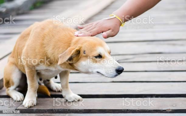 Stray dog picture id686597638?b=1&k=6&m=686597638&s=612x612&h=6i424q63ykxfrd7ko z3x0gz1g6wo8dbat2qfhf3 qi=