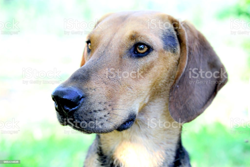 stray dog pictured in nature royalty-free stock photo