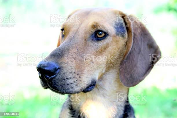 길 잃은 개에 사진된 자연 가축에 대한 스톡 사진 및 기타 이미지