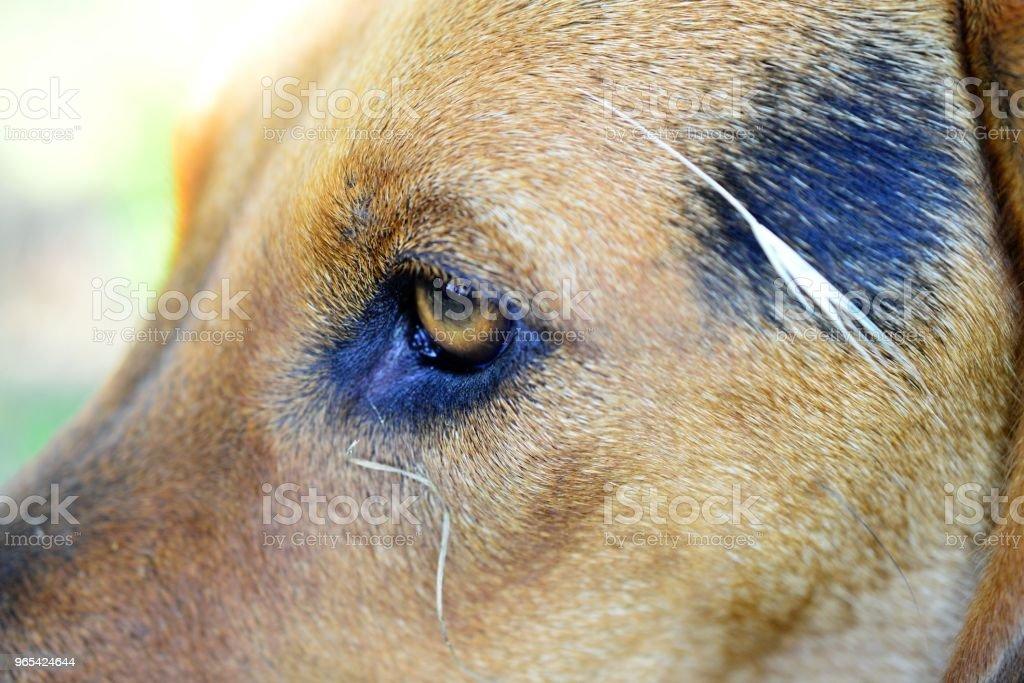 Eparses chien sur la photo dans la nature - Photo de A l'abandon libre de droits