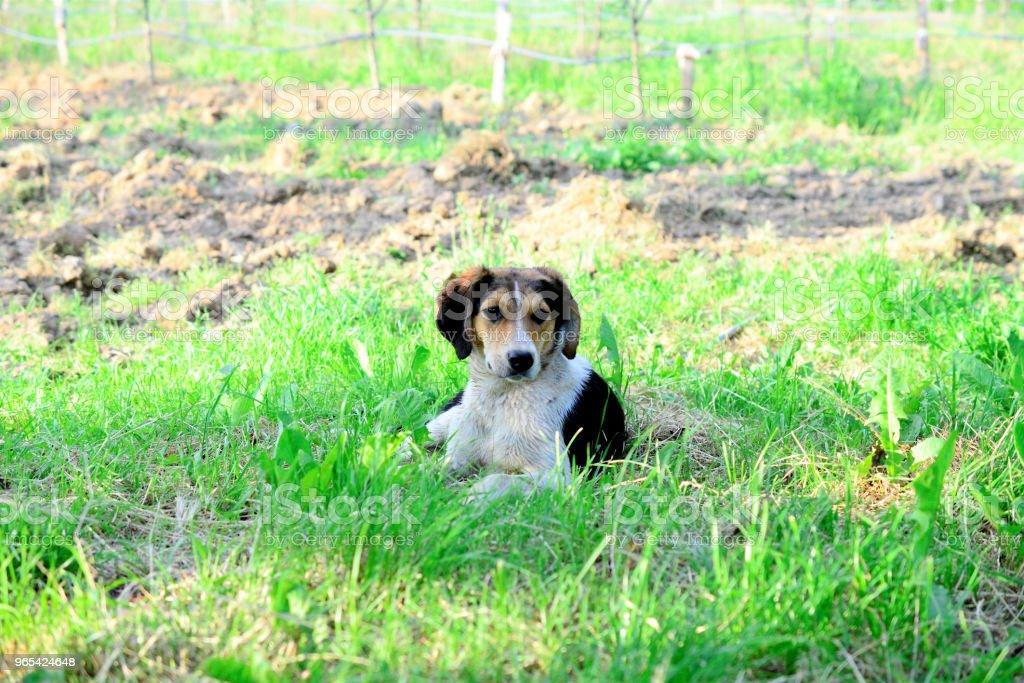 길 잃은 개에 사진된 자연 - 로열티 프리 가축 스톡 사진