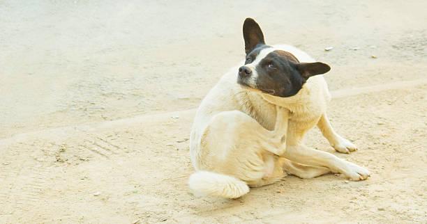 Cтоковое фото Бродячее собака Поцарапанный