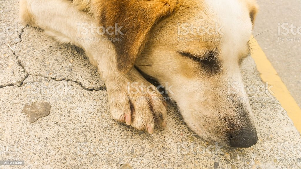 Stray dog sitting on the pavement stock photo