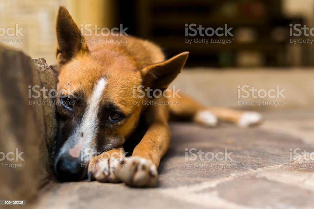 Stray dog sleeping on the stairs stock photo