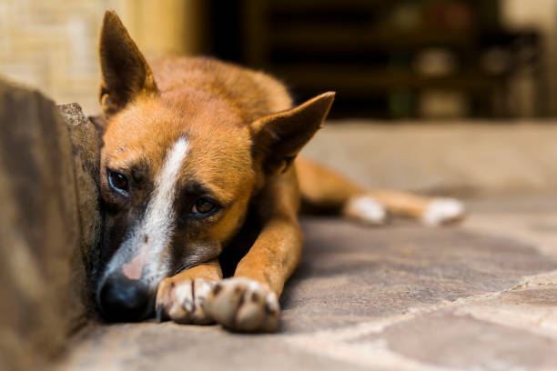 stray dog sleeping on the stairs - one animal stock photos and pictures