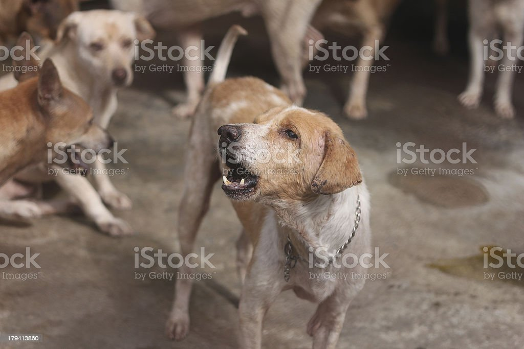 stray dog \t yap royalty-free stock photo