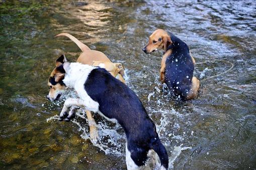 길 잃은 개와 Amstaff 재생 및 크리 어 물에 시체를 새로 고침 갈색에 대한 스톡 사진 및 기타 이미지