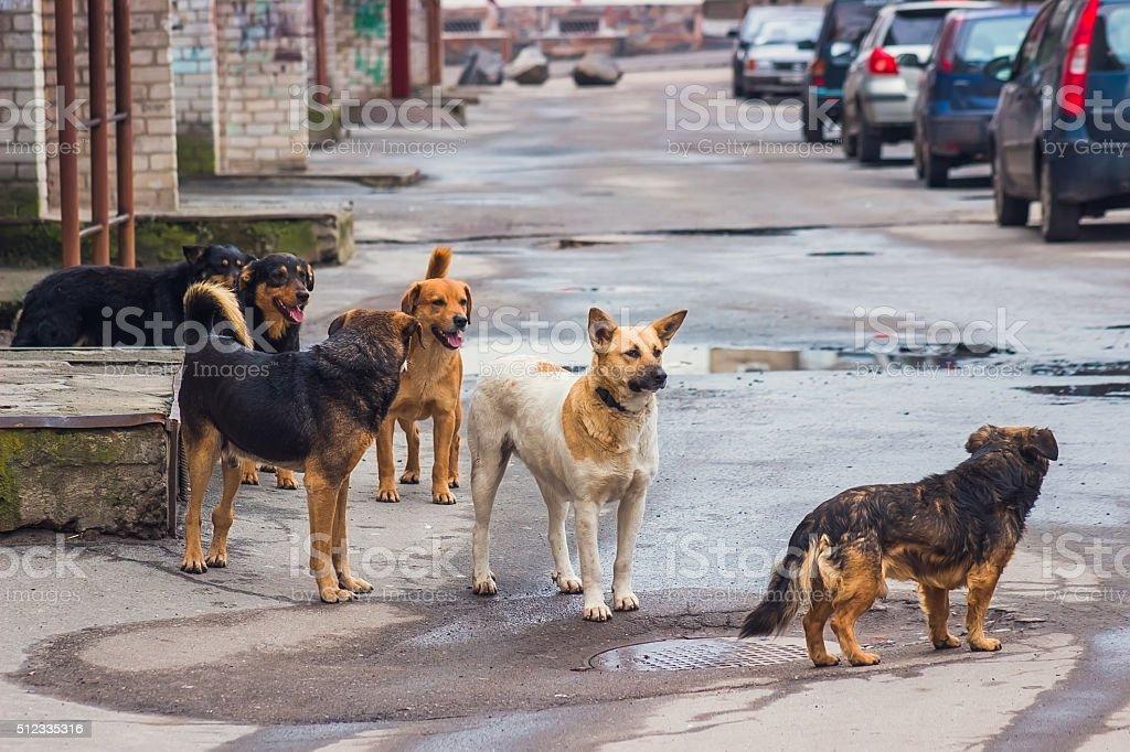 Parásito de perros en la calle - foto de stock