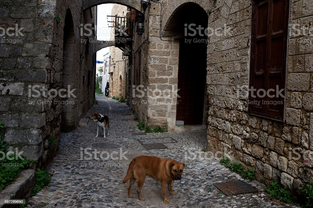 Stray dogs on the Rhodes streets, Greece. royalty-free stock photo