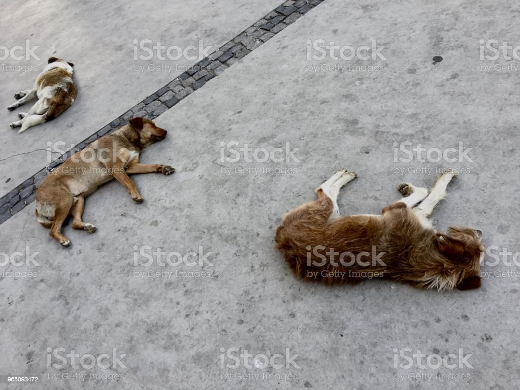 Stray Dogs royalty-free stock photo