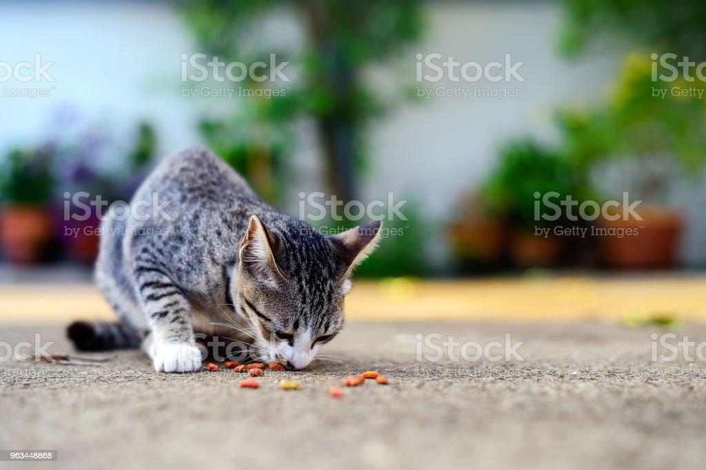 yemek yiyecek ışık üzerinde ve yumuşak odak ile arka planda yolunu yitirmek kedi - Royalty-free ABD Stok görsel