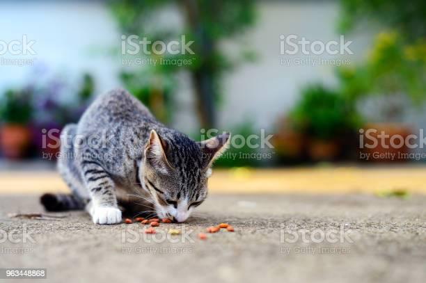 Yemek Yiyecek Işık Üzerinde Ve Yumuşak Odak Ile Arka Planda Yolunu Yitirmek Kedi Stok Fotoğraflar & ABD'nin Daha Fazla Resimleri