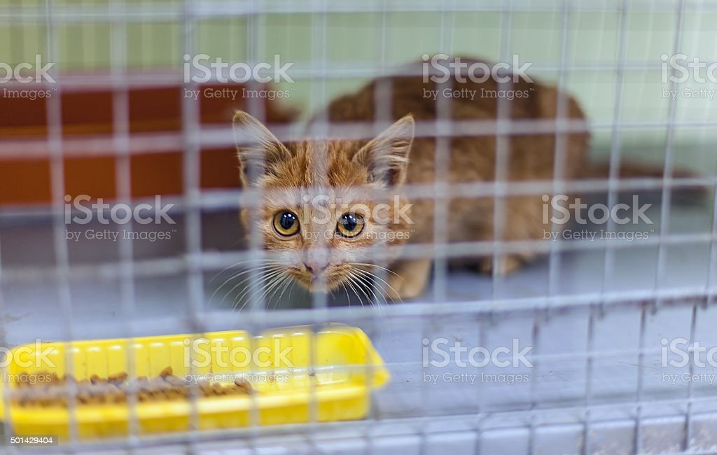 Stray kitten in a shelter stock photo
