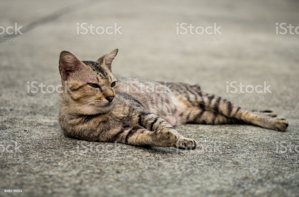 A stray tabby cute cat. stock photo