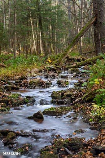 Stream running through Tillman Ravine surrounded by vegetation
