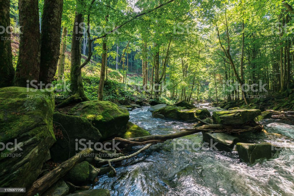 stream among the rocks in the deep forest stock photo