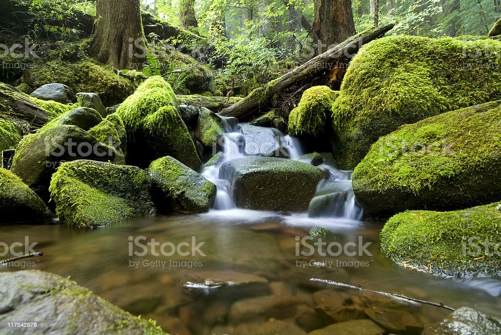 Stream and Moss royalty-free stock photo