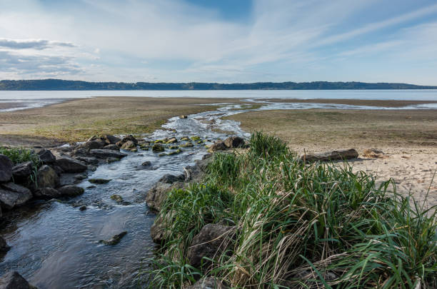 Stream And Shoreline A stream flows across the shoreline and into the Puget Sound at Dash Pioint State Park in Washington State. puget sound stock pictures, royalty-free photos & images