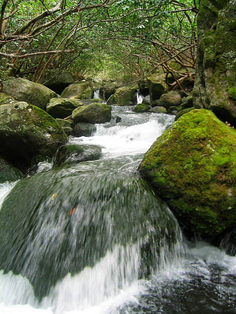 Stream at Nualolo Aina stock photo