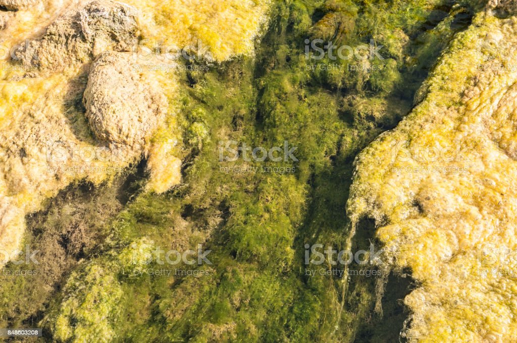 Stream bed of a small polluted river undegoing eutrophication, covered by an overgrowth of algae stock photo