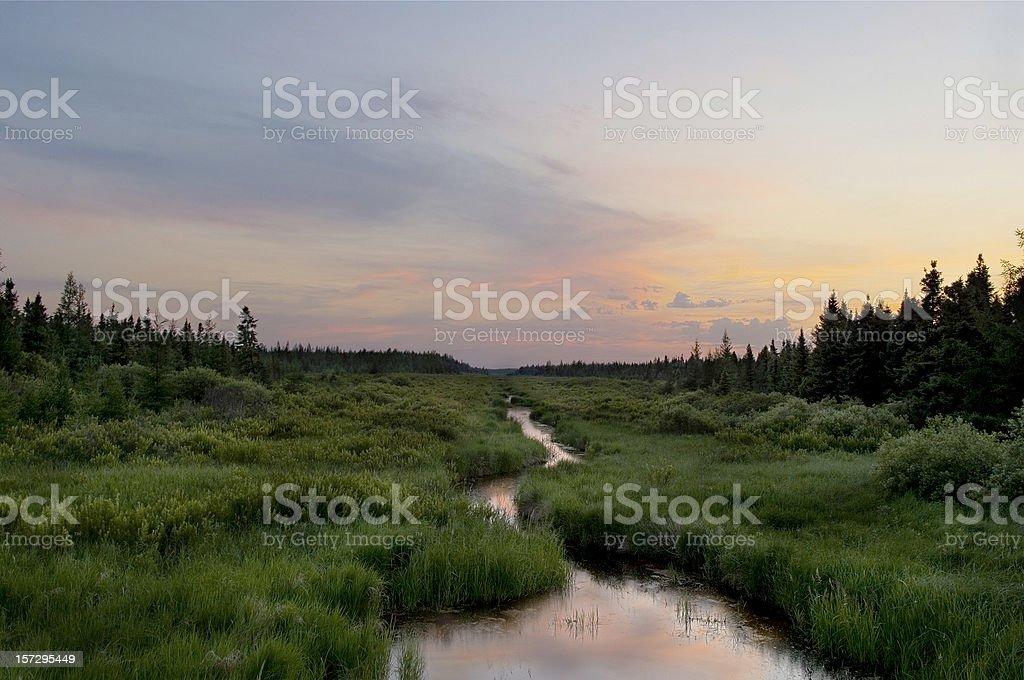 Corriente, el Centro de Vida Silvestre de Minnesota - foto de stock