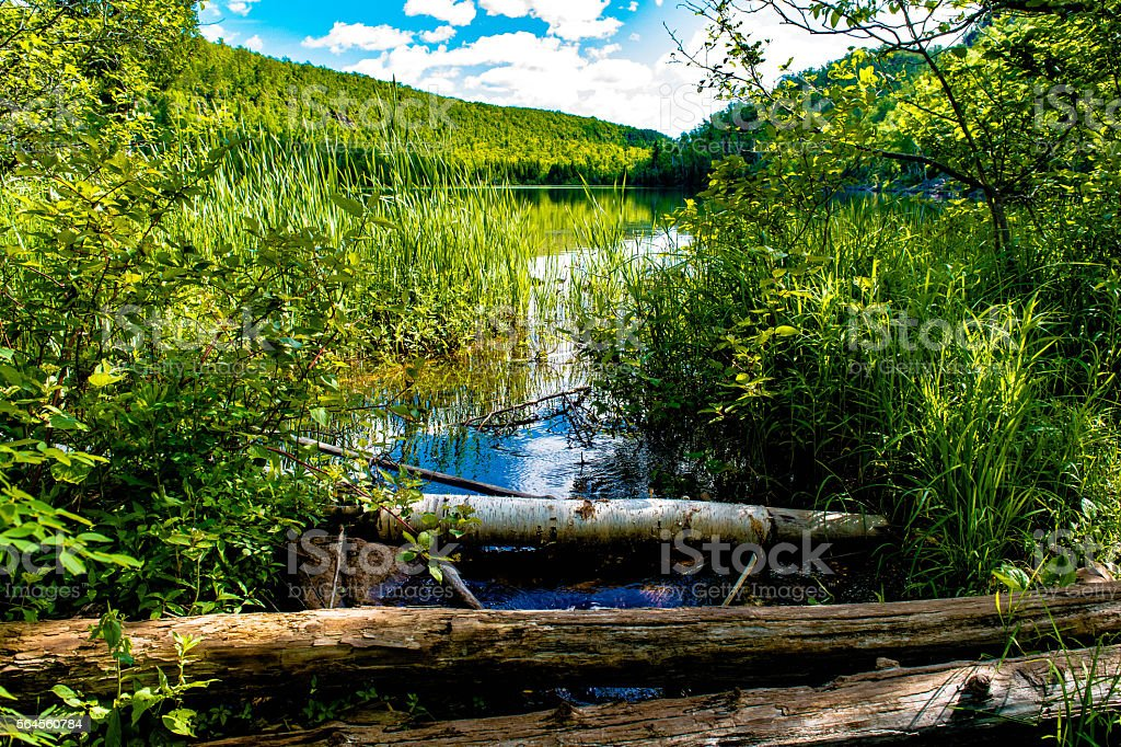 stream coming out of trout lake royalty-free stock photo