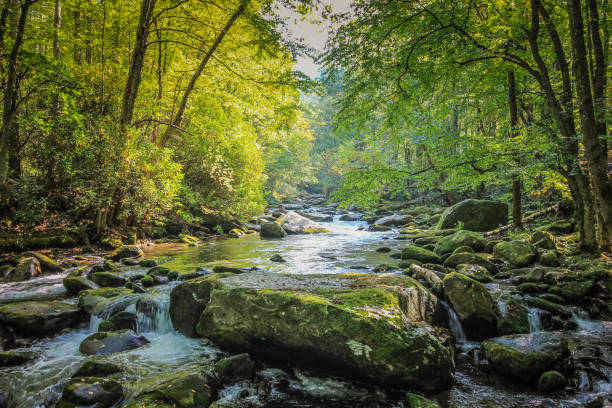 Stream Flowing through Forest in Tennessee Hiking Path next to Stream in Smokey Mountain National Park tennessee stock pictures, royalty-free photos & images