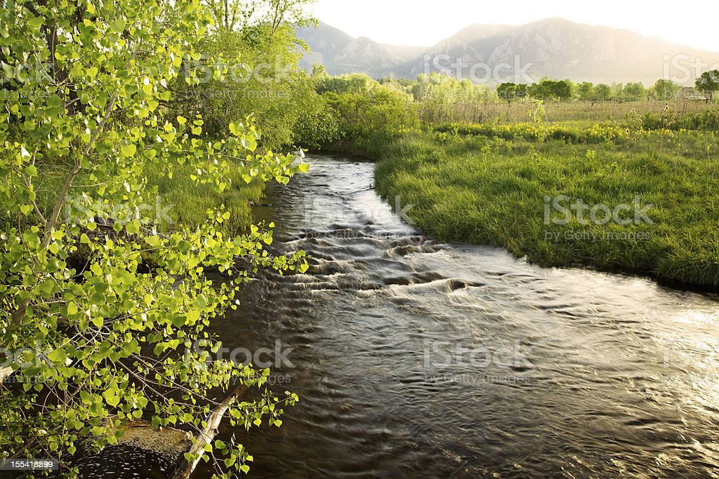 Stream Flowing Through Green Fields royalty-free stock photo
