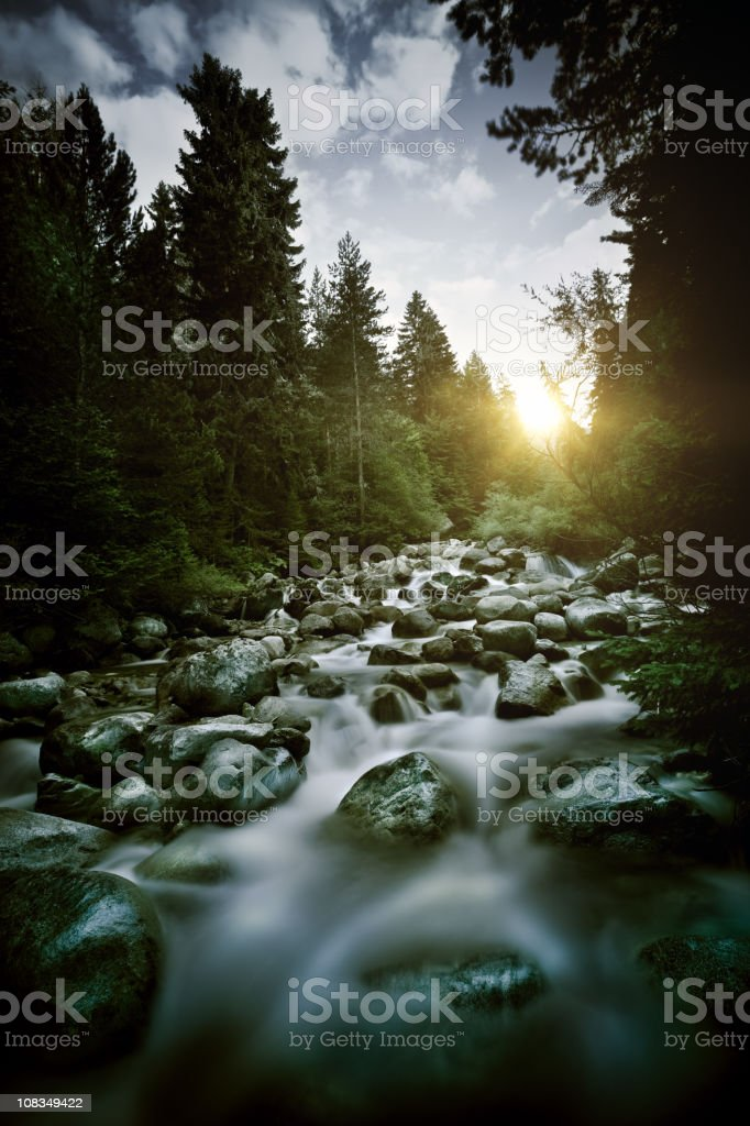 Stream in a forest royalty-free stock photo