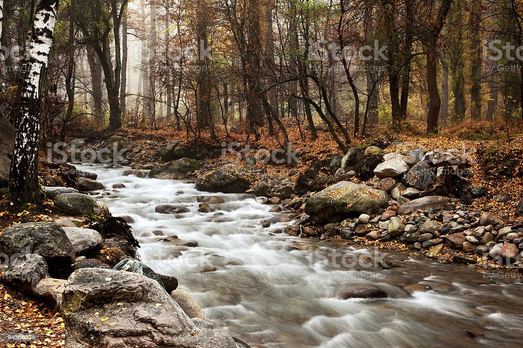 Stream in autumn forest royalty-free stock photo