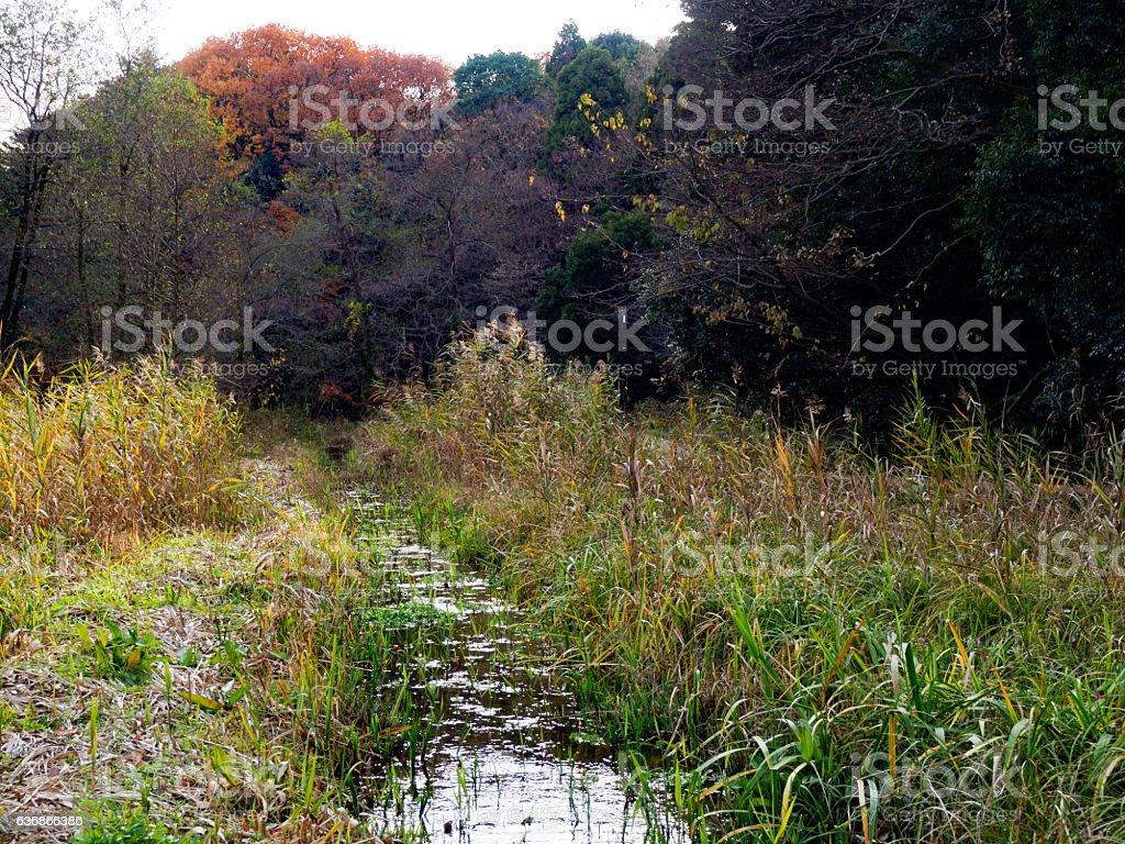 秋の小川  ストックフォト