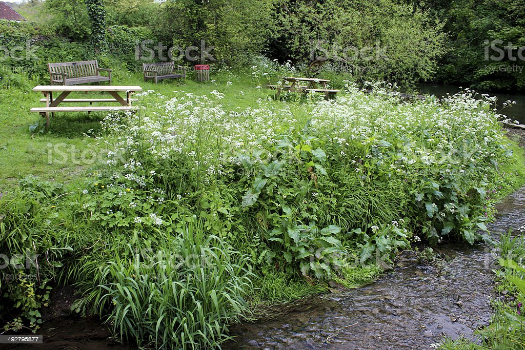 Stream in countryside leading to river, surrounded by wild flowers stock photo