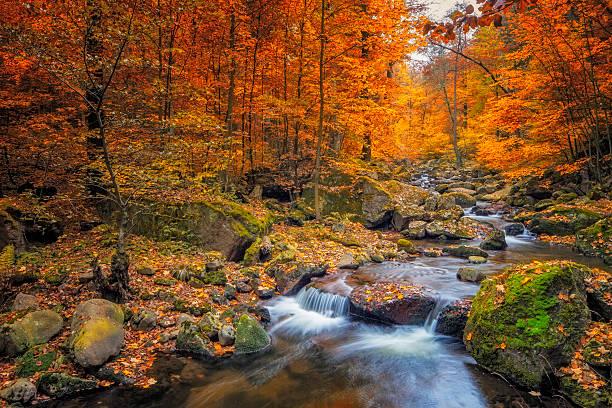 bach im nebligen wald im herbst - nationalpark harz - bach stock-fotos und bilder