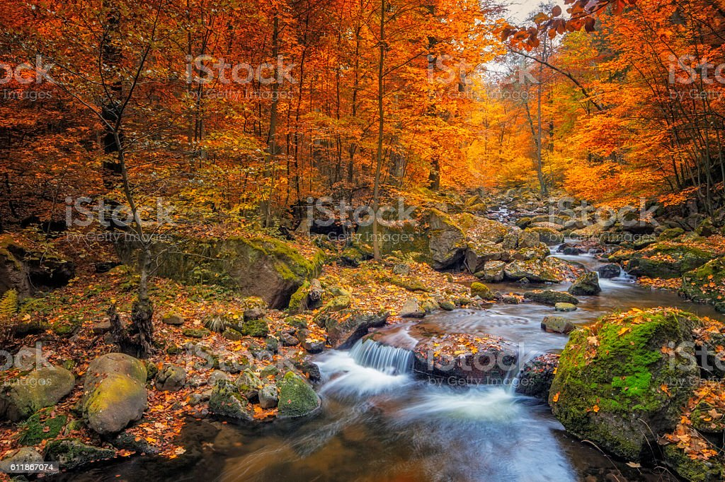 Stream in foggy Forest at autumn - Nationalpark Harz - foto de stock