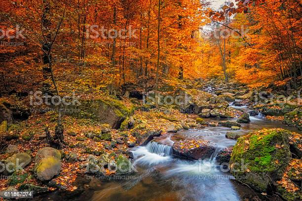 Photo of Stream in foggy Forest at autumn - Nationalpark Harz