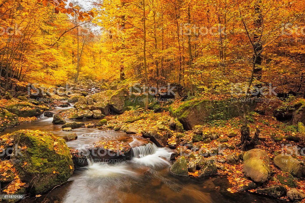 Stream in foggy Forest at autumn - Nationalpark Harz stock photo