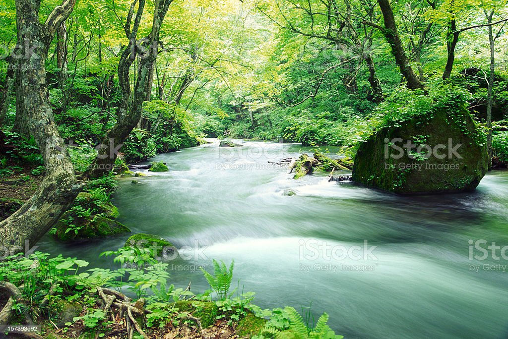 Stream in forest royalty-free stock photo