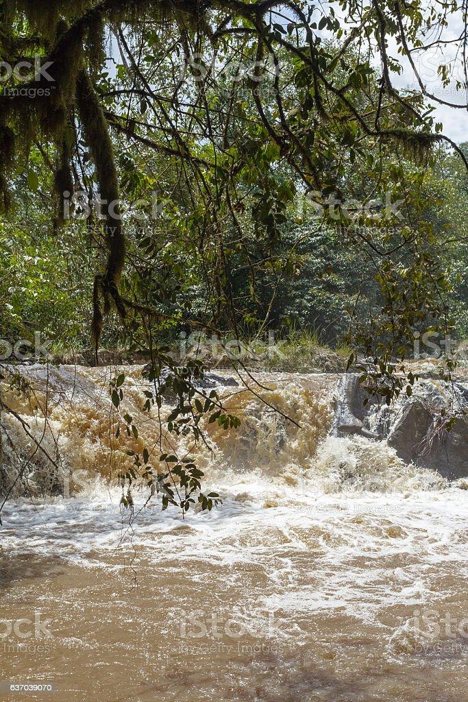 Stream in Kakamega Forest. Kenya, Africa stock photo