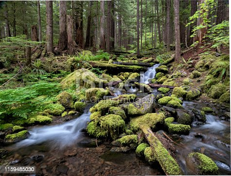 Stream in Rainforest near Sol Duc River, Olympic Naational Park