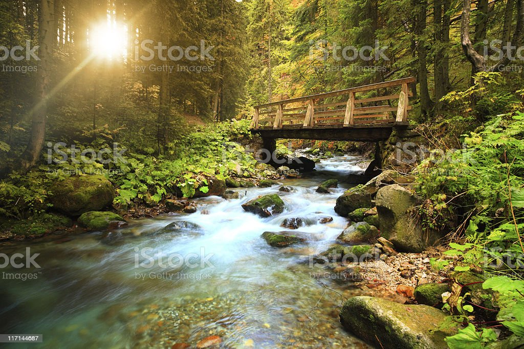 Stream in the forest stock photo