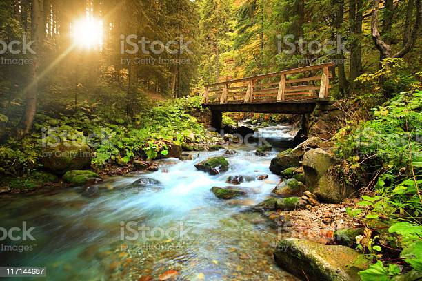 Stream In The Forest Stock Photo - Download Image Now