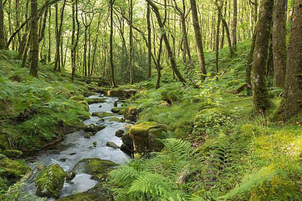 Stream im Wald – Foto