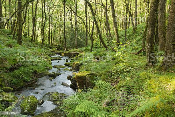 Photo of Stream In The Forest