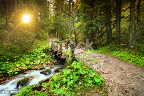 Stream in the Mountain Forest during Sunset - Motion Blur - XXXL image.
