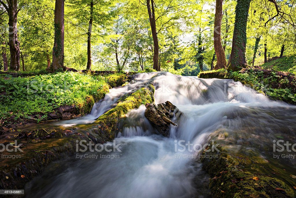 Stream in the wood royalty-free stock photo